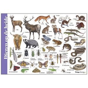 Tringa paintings natuurkaarten Herkenningskaart Dieren op de heide