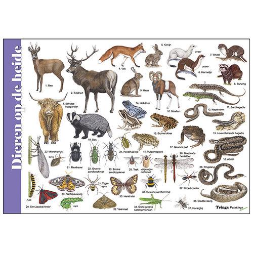 Tringa paintings natuurkaarten Herkenningskaart natuur Dieren op de heide