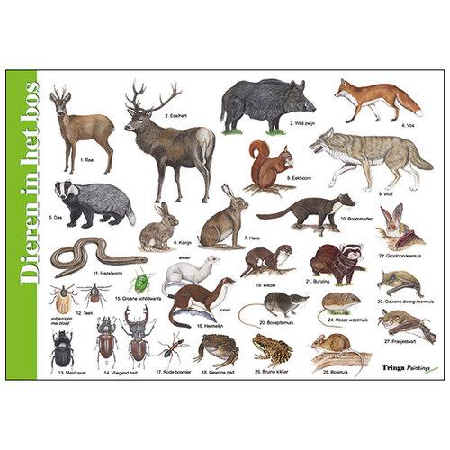 Tringa paintings natuurkaarten Herkenningskaart Dieren in het bos