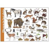 Herkenningskaart Dieren in het duin