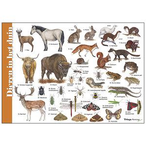 Tringa paintings natuurkaarten Herkenningskaart Dieren in het duin