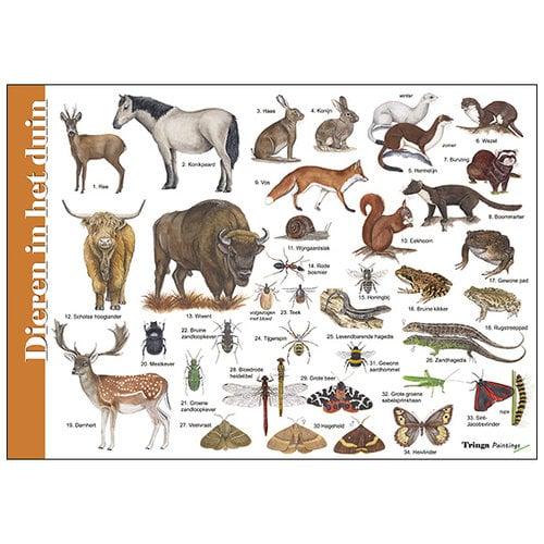 Tringa paintings natuurkaarten Herkenningskaart natuur Dieren in het duin