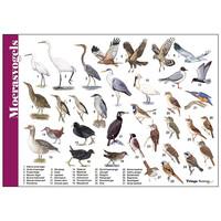 Herkenningskaart Moerasvogels