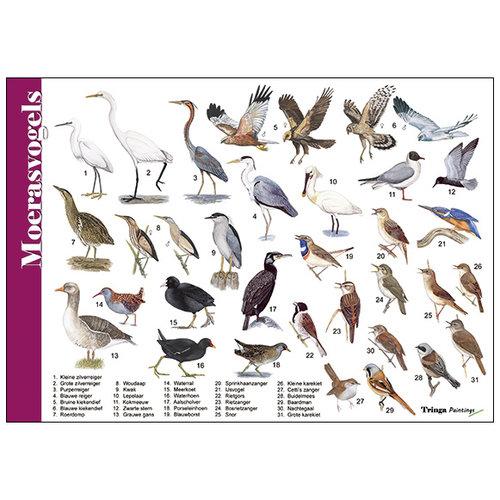 Tringa paintings natuurkaarten Herkenningskaart natuur Moerasvogels