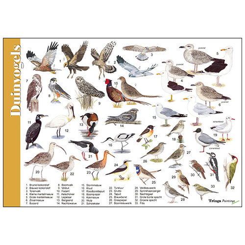 Tringa paintings natuurkaarten Herkenningskaart natuur Duinvogels