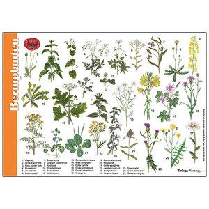 Tringa paintings natuurkaarten Herkenningskaart Bermplanten