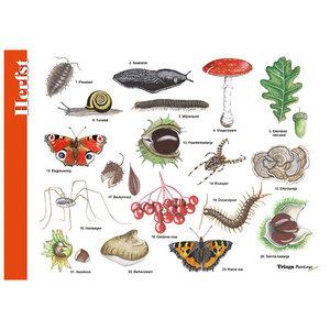Tringa paintings natuurkaarten Herkenningskaart Herfst