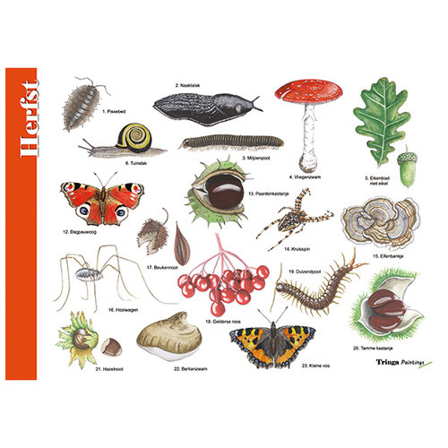 Tringa paintings natuurkaarten Tringa Painitings herkenningskaart Herfst