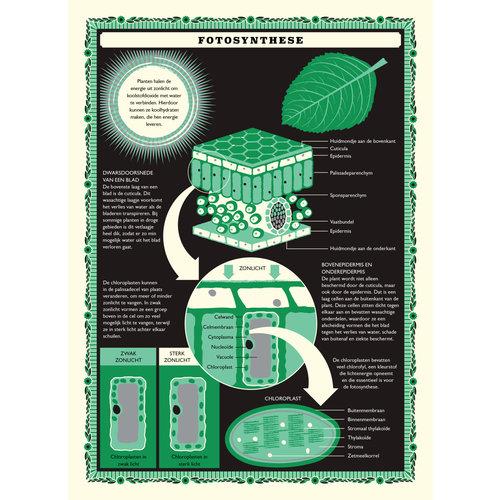 Lemniscaat Lemniscaat - Een wereld vol planten