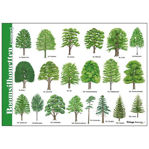Tringa paintings natuurkaarten Herkenningskaart natuur boomsilhouetten