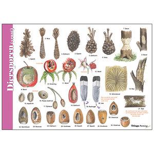 Tringa paintings natuurkaarten Herkenningskaart Diersporen