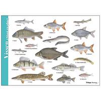 Herkenningskaart Vissen sloot en plas