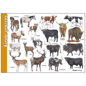 Tringa paintings natuurkaarten Herkenningskaart Grote Grazers