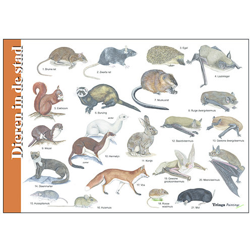 Tringa paintings natuurkaarten Herkenningskaart Dieren in de stad