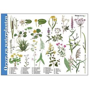 Tringa paintings natuurkaarten Herkenningskaart Oever- en waterplanten