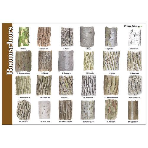Tringa paintings natuurkaarten Herkenningskaart natuur Boomschors
