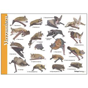 Tringa paintings natuurkaarten Herkenningskaart Vleermuizen