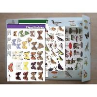 Tringa 50 herkenningskaarten in opbergmap