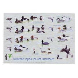 Duikende vogels IJsselmeer