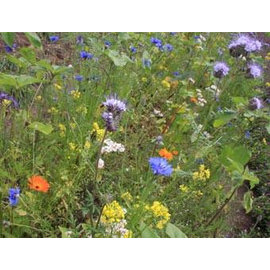 Bolster Bloemzadenmengsel Tübinger voor bijen
