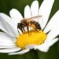 IVN Bijenpakket