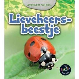 Levensloop van een - Lieveheersbeestje