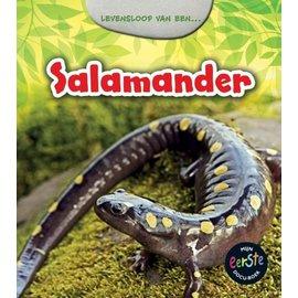 Levensloop van een - Salamander