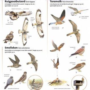 KNNV Minigids Roofvogels van Nederland en België