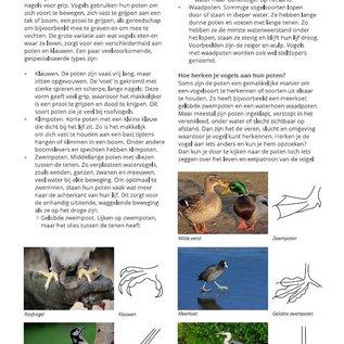 IVN Boek - Vogels voor beginners