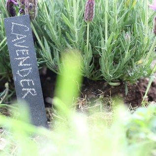 Plantenlabel van leisteen (set van 6 met waxstift)