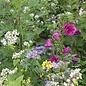 Bolster Bloemzadenmengsel Tübinger voor bijen en vlinders