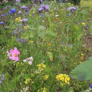 Bloemzadenmengsel Tübinger voor bijen en vlinders