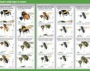 Bijen zoekkaarten