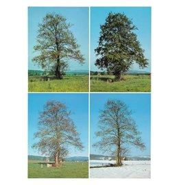 IVN Vier seizoenen foto's boom