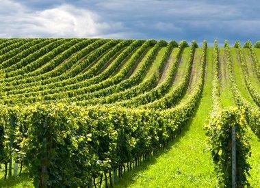 Wijn per land