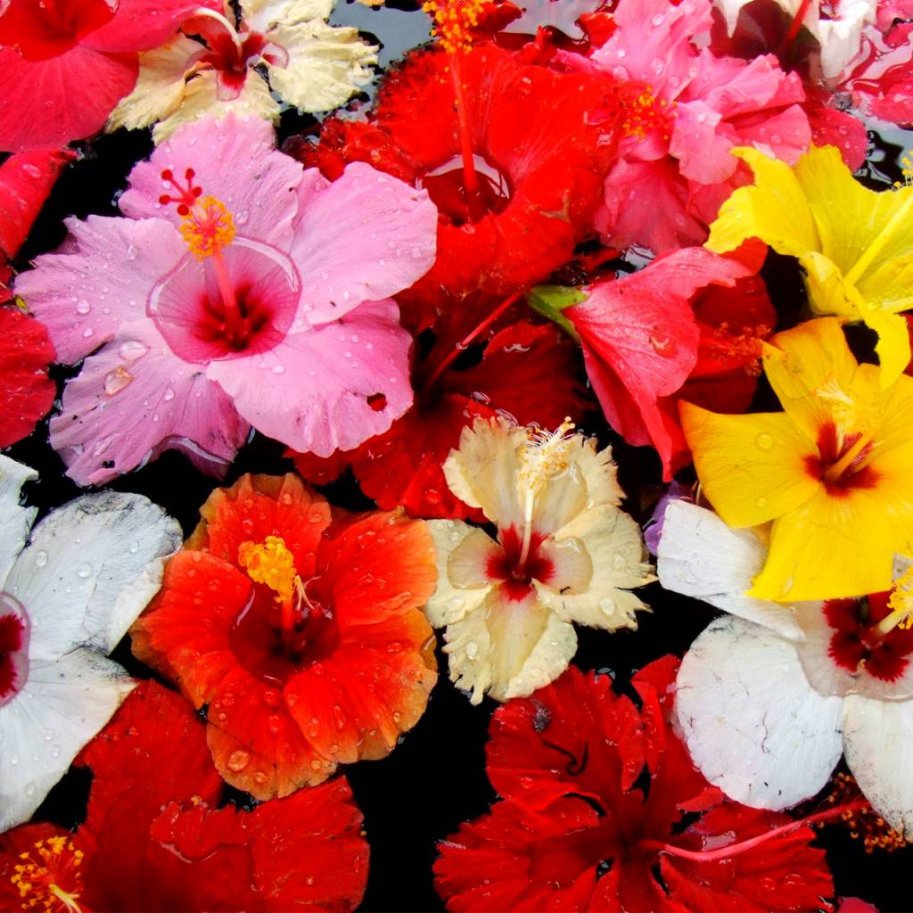 CLASSIC - Hibiscus - Fruitsiroop