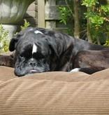 Dog's Companion® Hondenbed oxford ribcord extra small