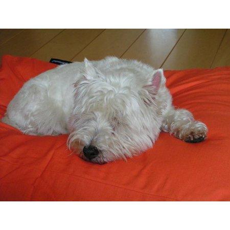 Dog's Companion® Hondenbed oranje large