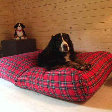 Dog's Companion® Hondenbed royal stewart small