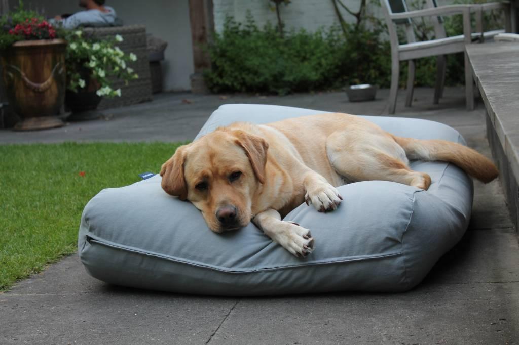 Dogs Companion® Hondenkussen lichtgrijs