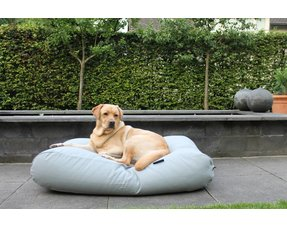 Grijze hondenkussens