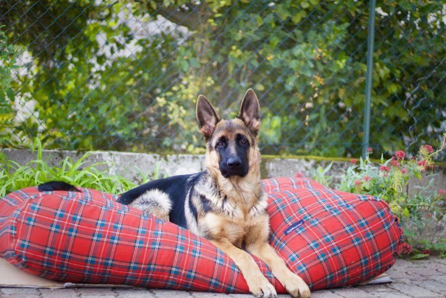 Dog's Companion® Hondenbed royal stewart extra small