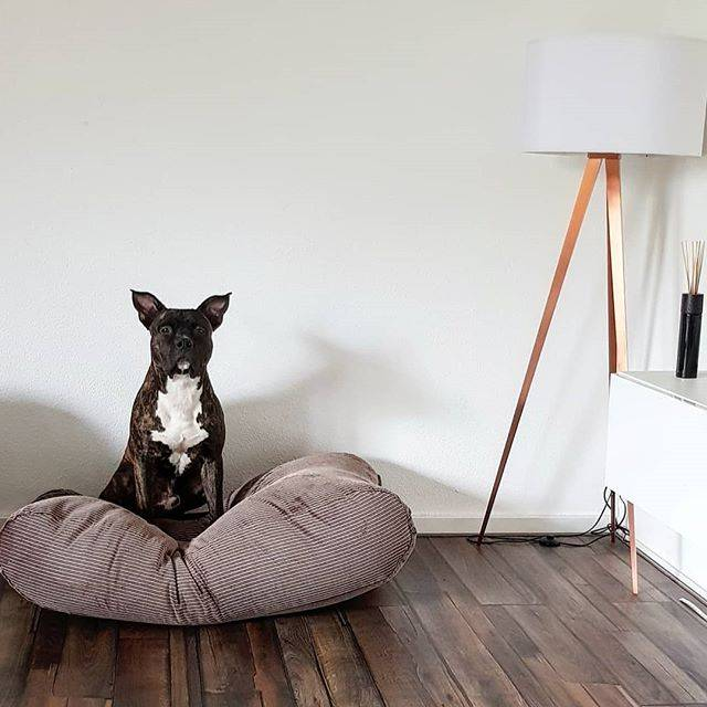 Dog's Companion® Hondenbed bruin/beige duo ribcord extra small