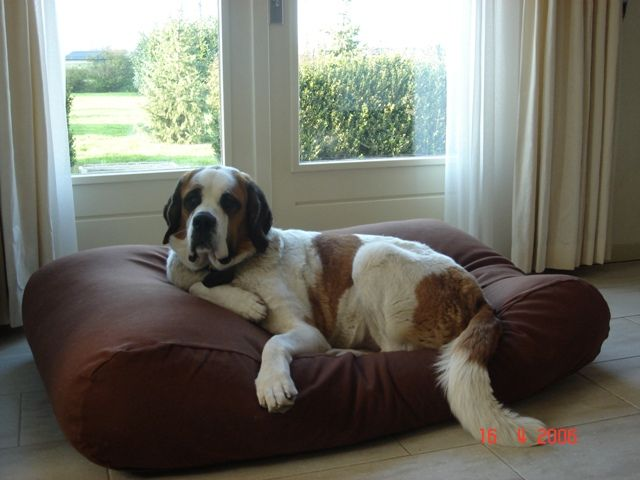 Dog's Companion® Hondenkussen chocolade bruin medium