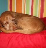 Dog's Companion® Hondenbed rood ribcord extra small