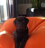 Dog's Companion® Hondenbed oranje extra small