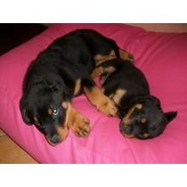 Hondenkussen roze small