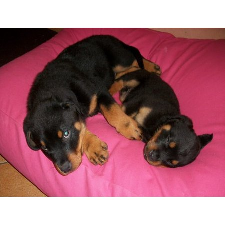Dog's Companion® Hondenkussen roze medium