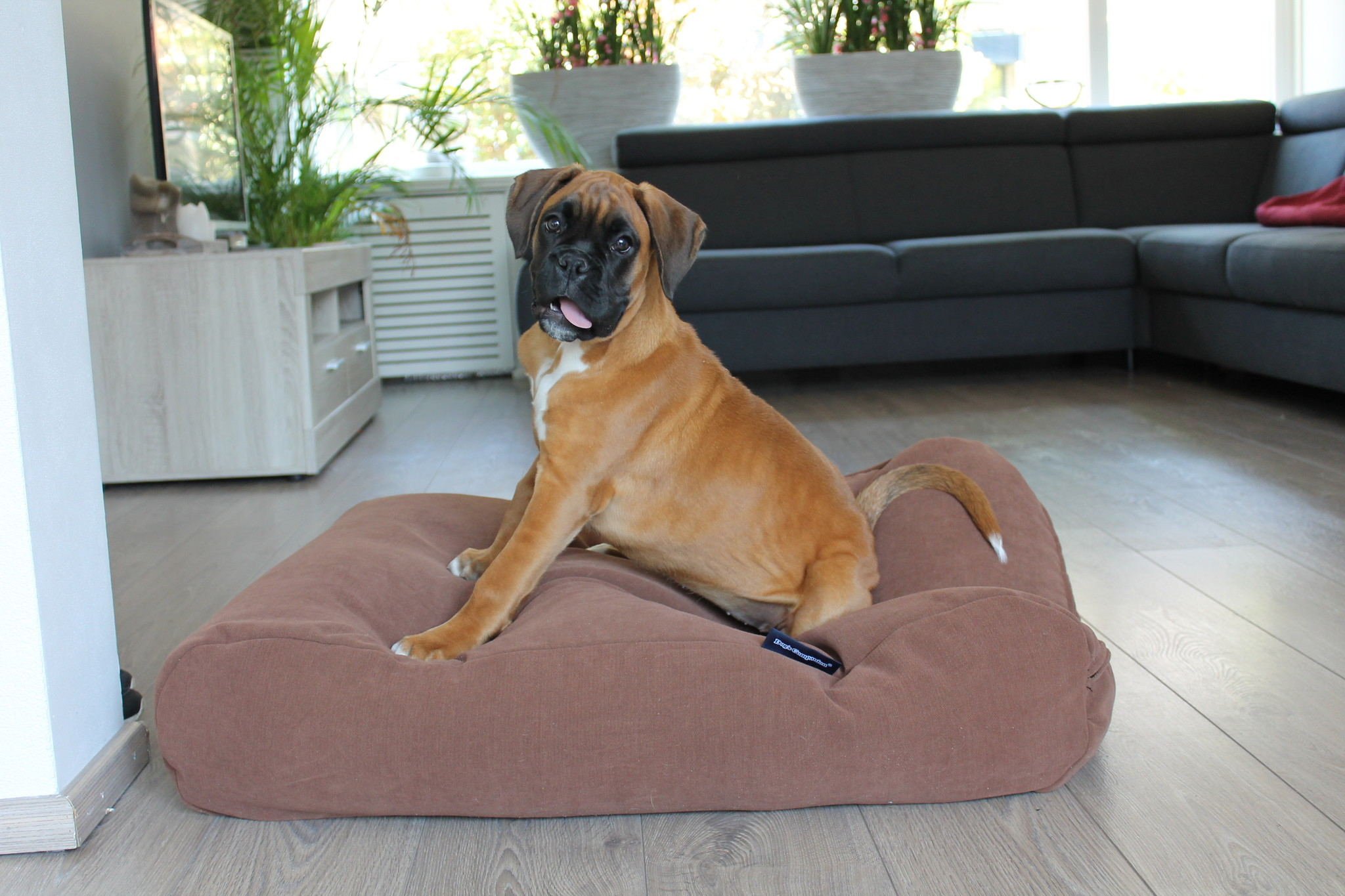 Dog's Companion® Hondenbed Mokka (chenille velours)