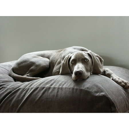 Dog's Companion® Hoes hondenbed muisgrijs ribcord superlarge